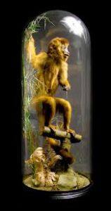 Taxidermy monkey