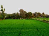 Rice paddy, weird rocks, Hampi