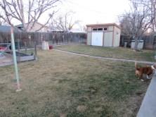 Matt's backyard