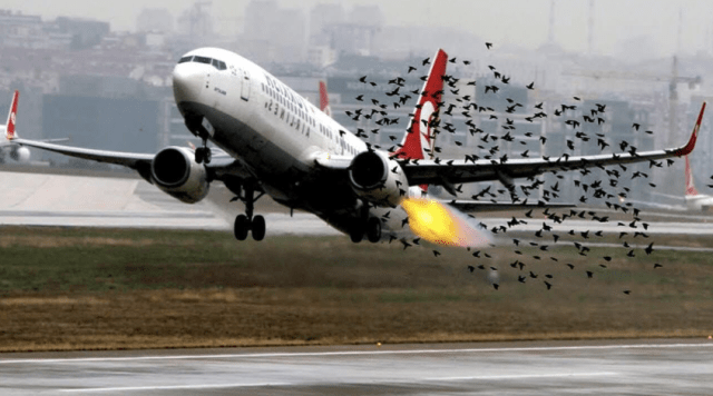 a birdstrike, fear of flying starts at take off