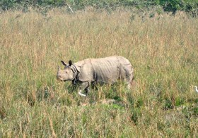 Pobitora: Where Rhinos Dare