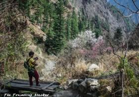 Rashol Trek: Rhododendrons and Wandering Pilgrims