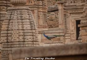 Bateshwar Temple Morena: Resurrection of a Masterpiece