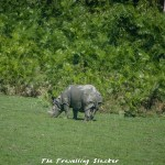 Kaziranga: Misanthropic Rhinos, Invisible Tigers