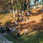 Cherries of Shillong: Prolonged Hunt, Fleeting Blossoms