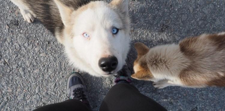 Blue eyed beauty