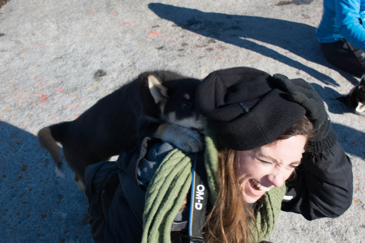 oqaatsut-greenland-wwellend-dog