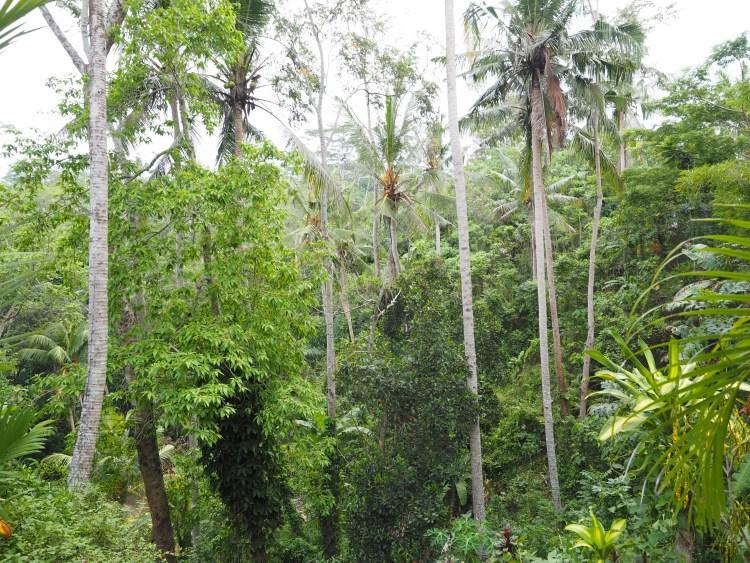 ubud-coffee-forest-bali