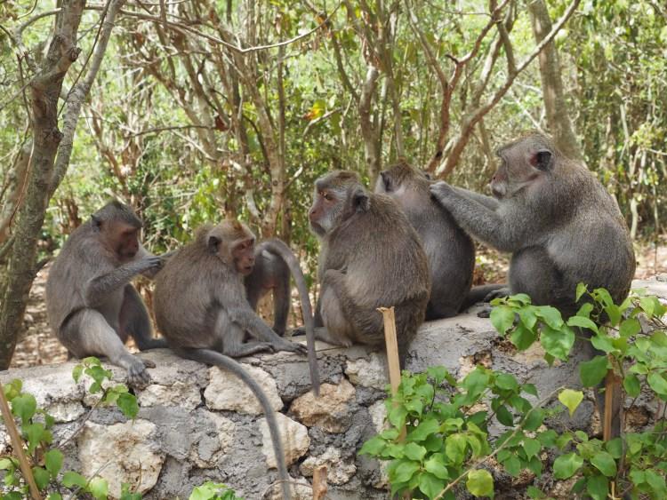 uluwatu-bali-temple-monkey