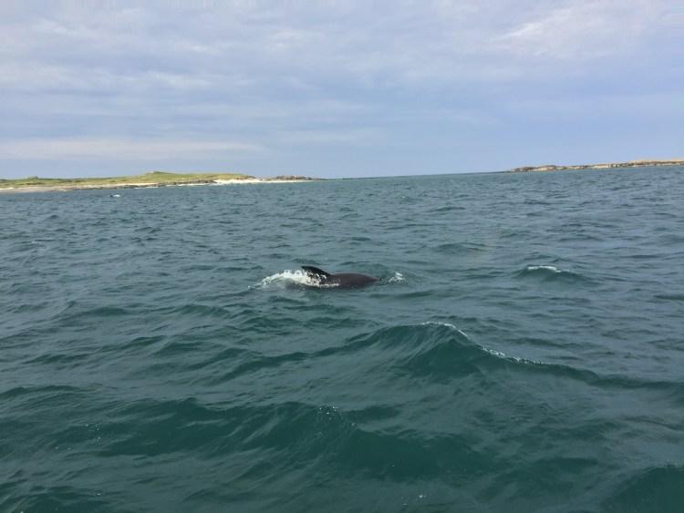Hello Mr Dolphin!