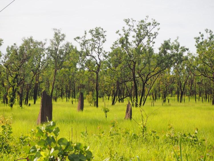 northern-territory-termite-mound