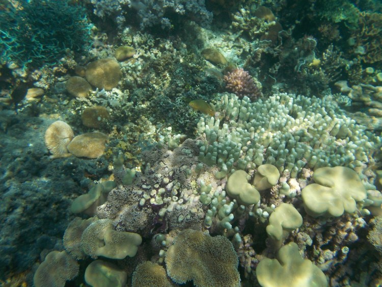 atauro-snorkel-timor-leste