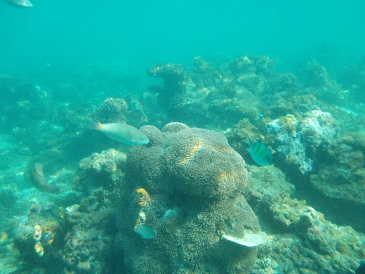 reef-miniloc-el-nido
