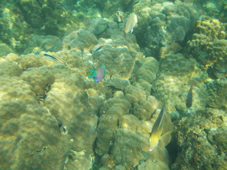 rainbow-fish-el-nido