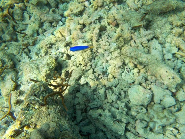 fish-miniloc-el-nido
