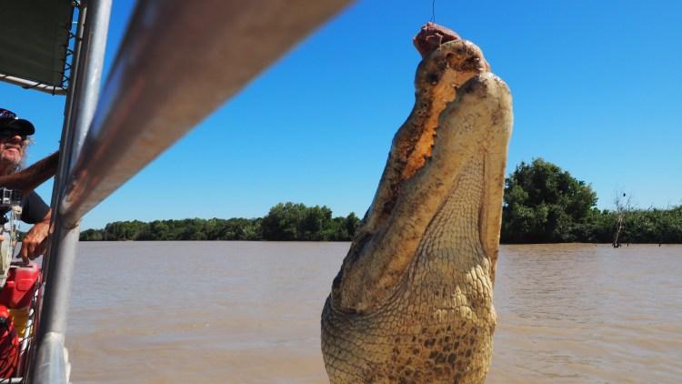 adelaide-river-darwin-crocodile