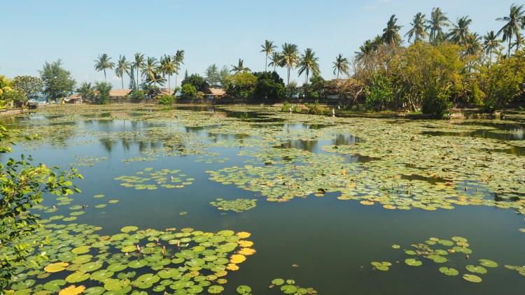 lotus-pond-bali-indonesia