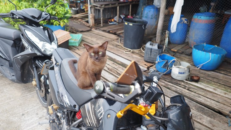 koh-kood-thailand-trat