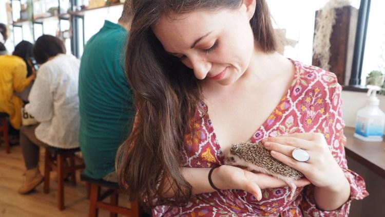 harrys-hedgehog-cafe-tokyo-japan-travel-blog-solo-female