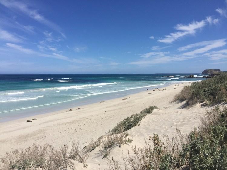 seal-bay-australia-kangaroo-island
