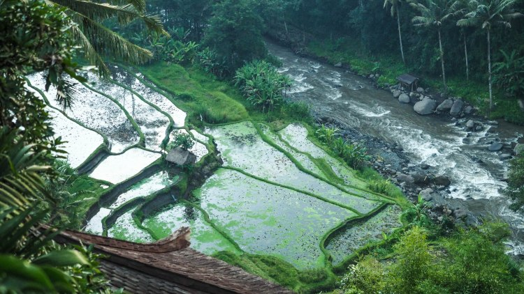 bali-ubud-travel-blog-jungle-retreat-kupu-kupu-barong-luxury-backpacking-solo-rice-fields