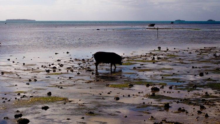 tongatapu-tonga-travel-blog-solo-backpacking-guide-fishing-pigs