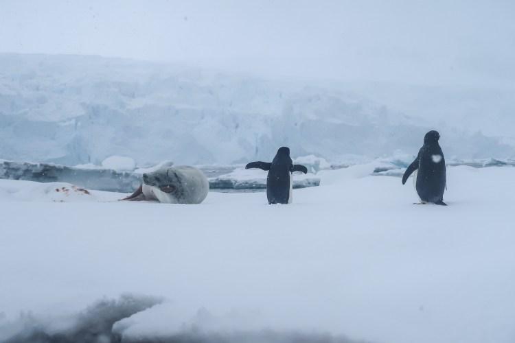 kayaking-antarctica-travel-blog-solo-oceanwide-expeditons