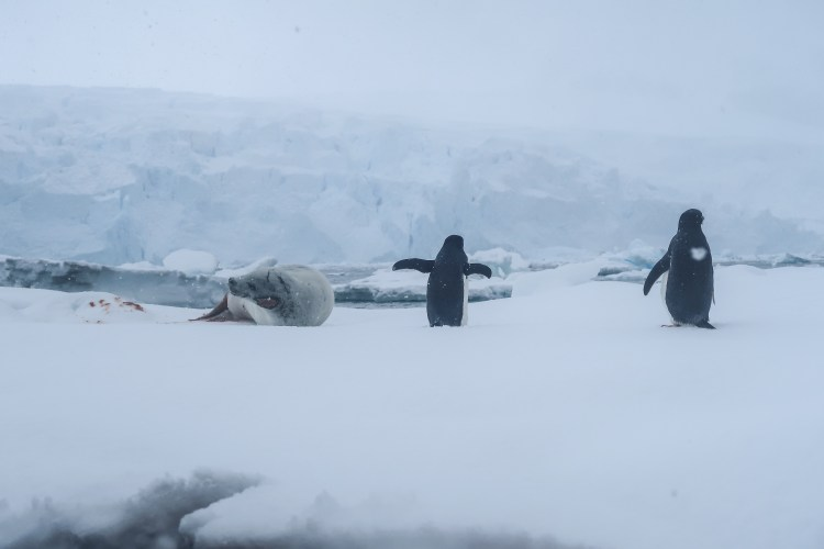 kayaking-antarctica-travel-blog-solo-oceanwide-expeditons