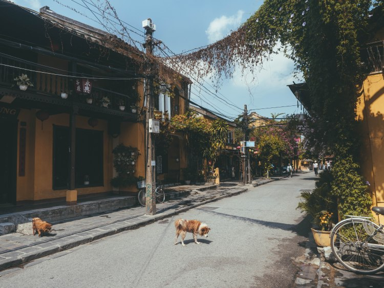 hoi-an-travel-blog-vietnam-travelling-the-world-solo