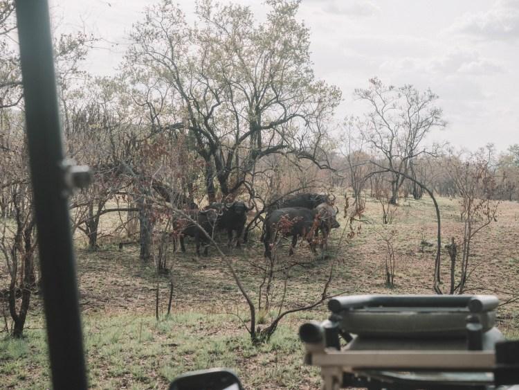 azura-selous-safari-tanzania-travel-blog-namibia-road-trip-self-drive-backpacking-travelling-the-world-solo