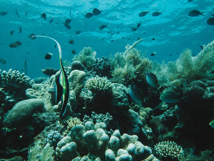 comoros-moheli-travel-blog-laka-lodge-scuba-diving-backpacking-travelling-the-world-solo