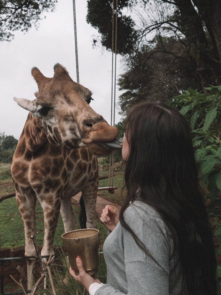 giraffe-manor-travel-blog-nairobi-kenya-solo-travelling-the-world