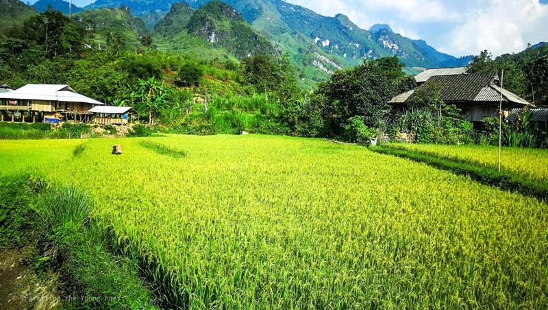 rijstvelden du gia, ha giang loop, vietnam
