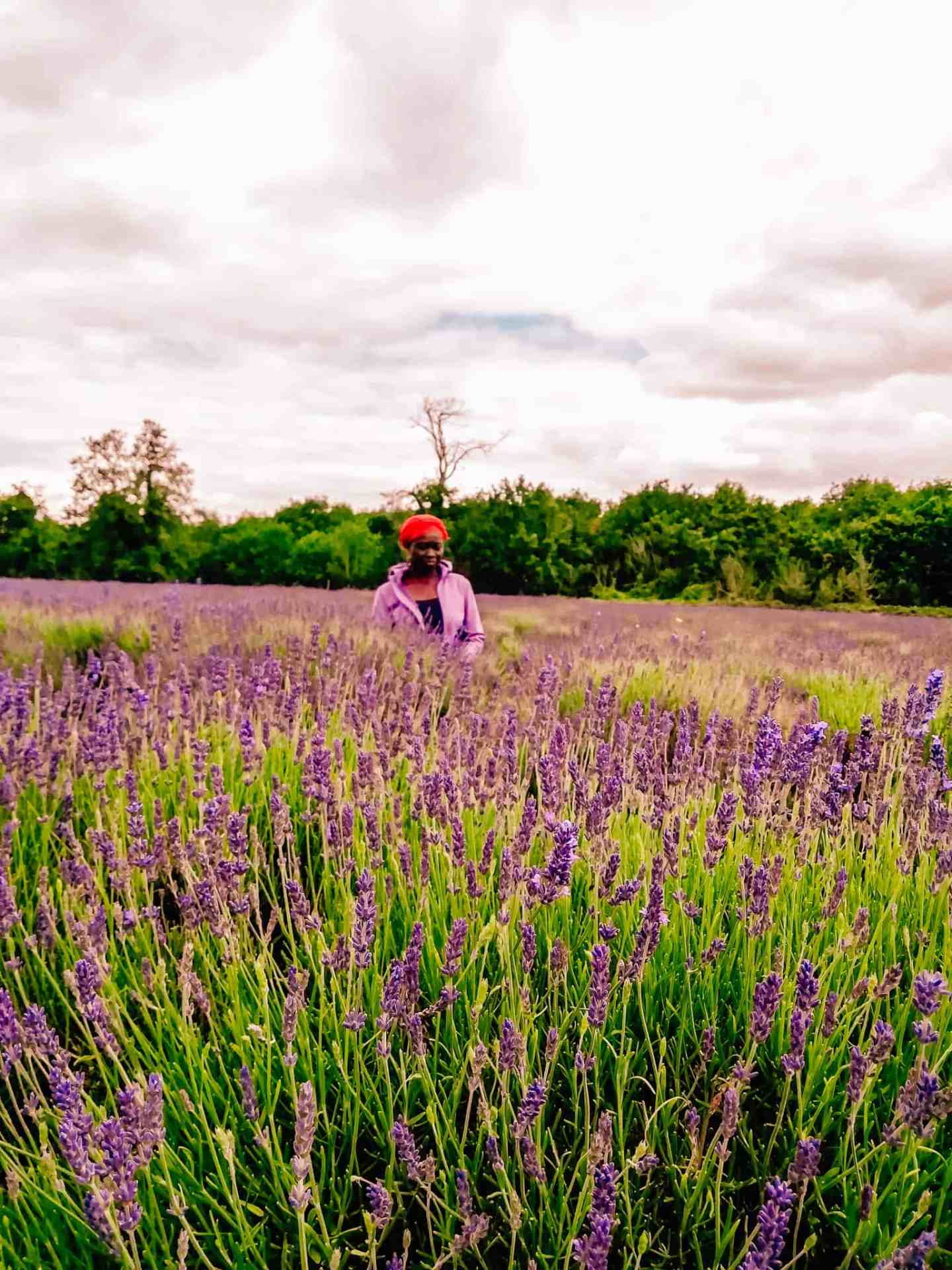 A lady with a purple jacket and red hat standing in a lavender field