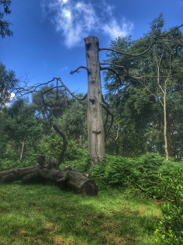 An old tree trunk in Trentham Monkey Forest