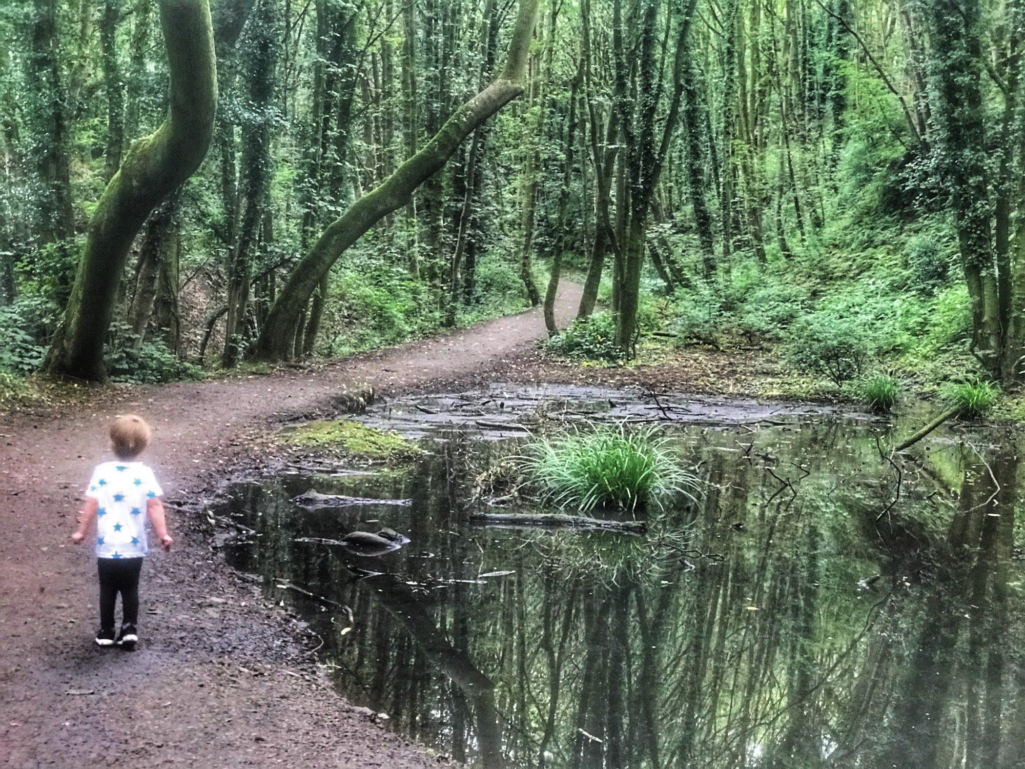 Dexter stood next to a pond in Fairy Glen, Parbold