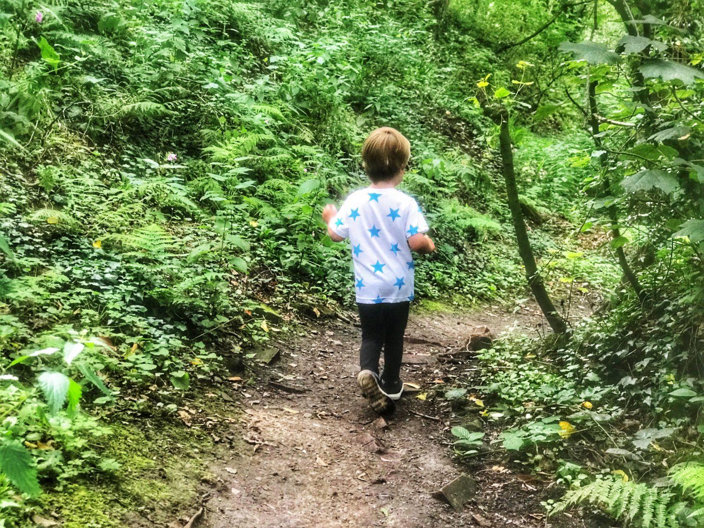 Dexter walking along a rocky path in Fairy Glen, Parbold