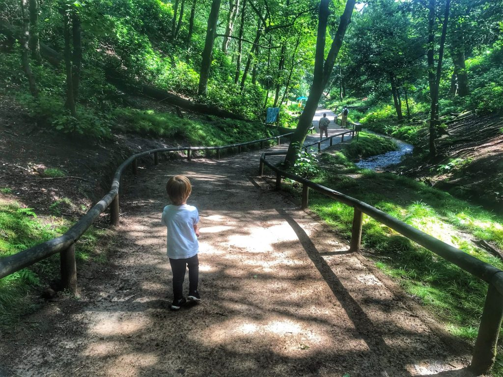 Dexter walking down a shaded path in Trentham Monkey Forest