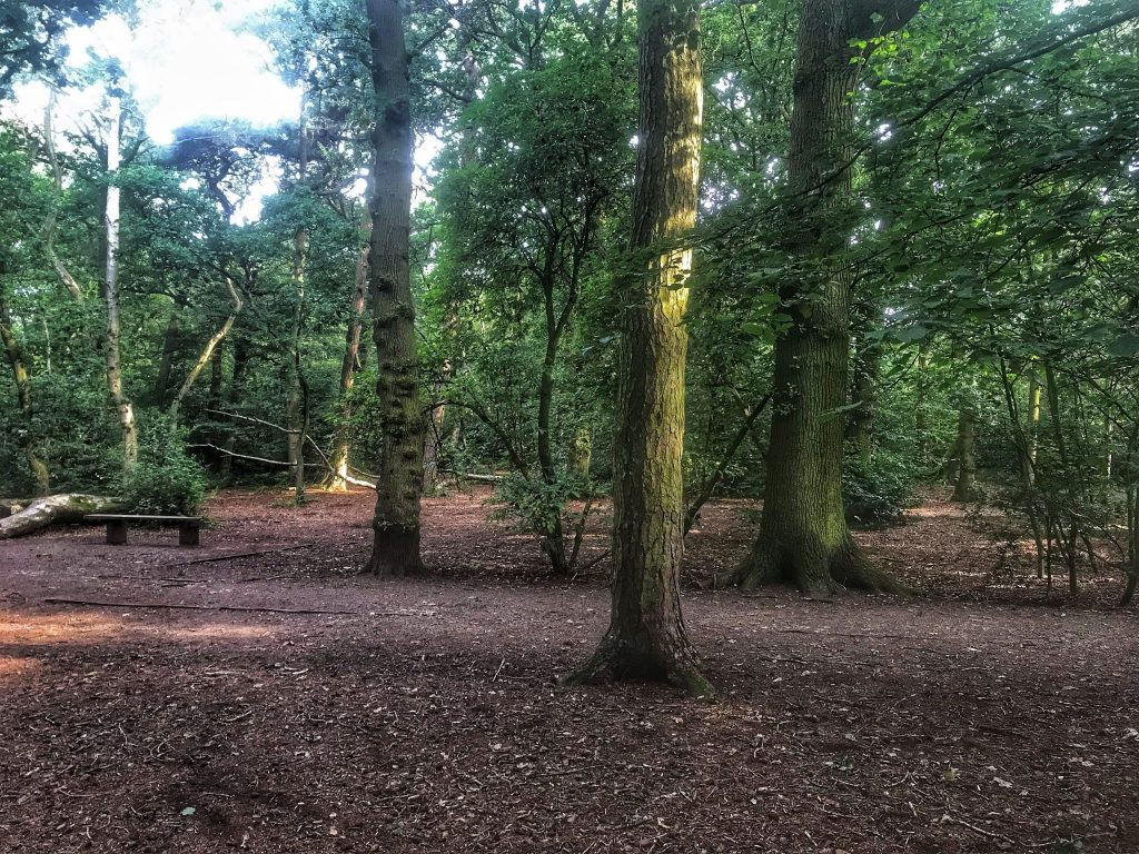 A bench located in the clearing with a few huge trees alongside in Ruff Wood Ormskirk