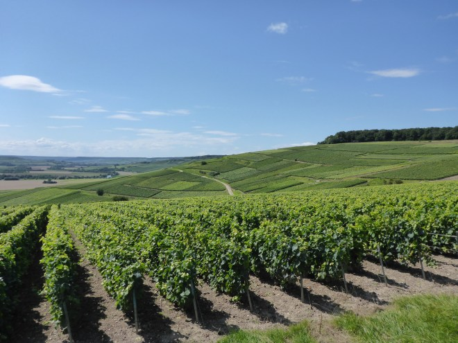 Vineyards in Champagne.