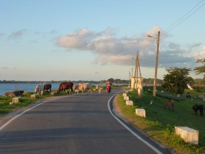 The road along lake Parakrama Samudra.