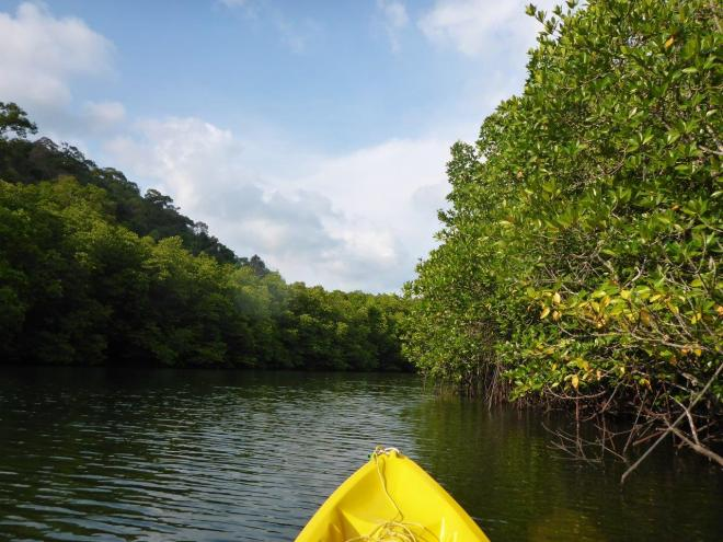 Paddling along the mangroves at Koh Kood