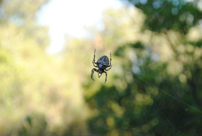 Itsy bitsy spider on the way to Tito's cave at Vis Island, Croatia