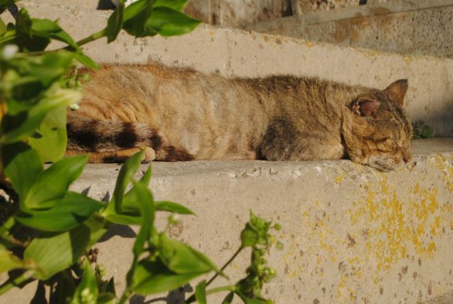Relaxing cat at Vis Island, Croatia