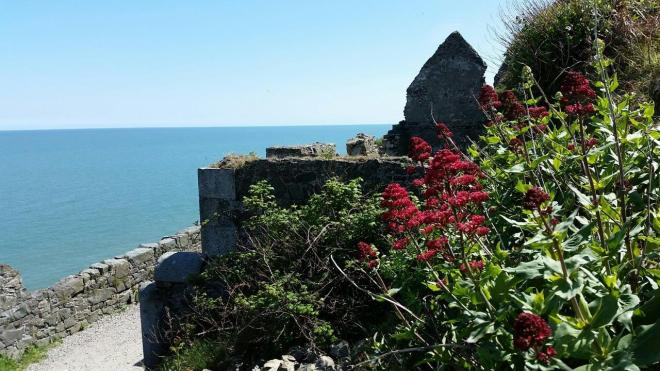 Flowers and an old stone house along the cliff walk between Bray and Greystone outside Dublin, Ireland