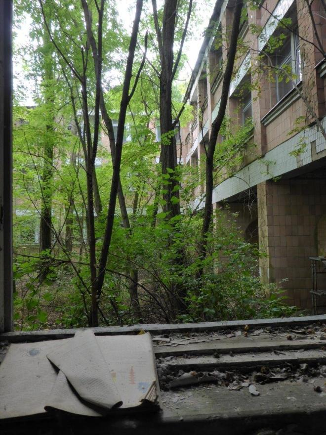 Nature taking over the school. Pripyat, Chernobyl, Ukraine