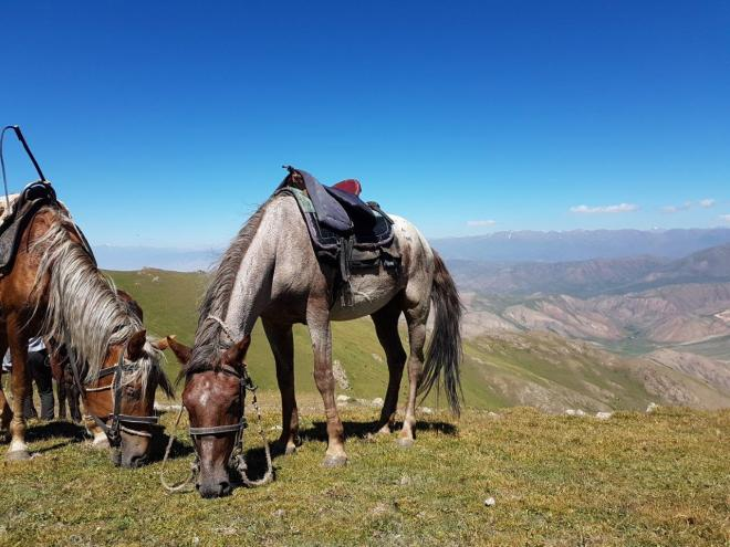 Our horses resting before heading down to Song Kul. Three day horse-riding trip to Song Kul, Kyrgyzstan.