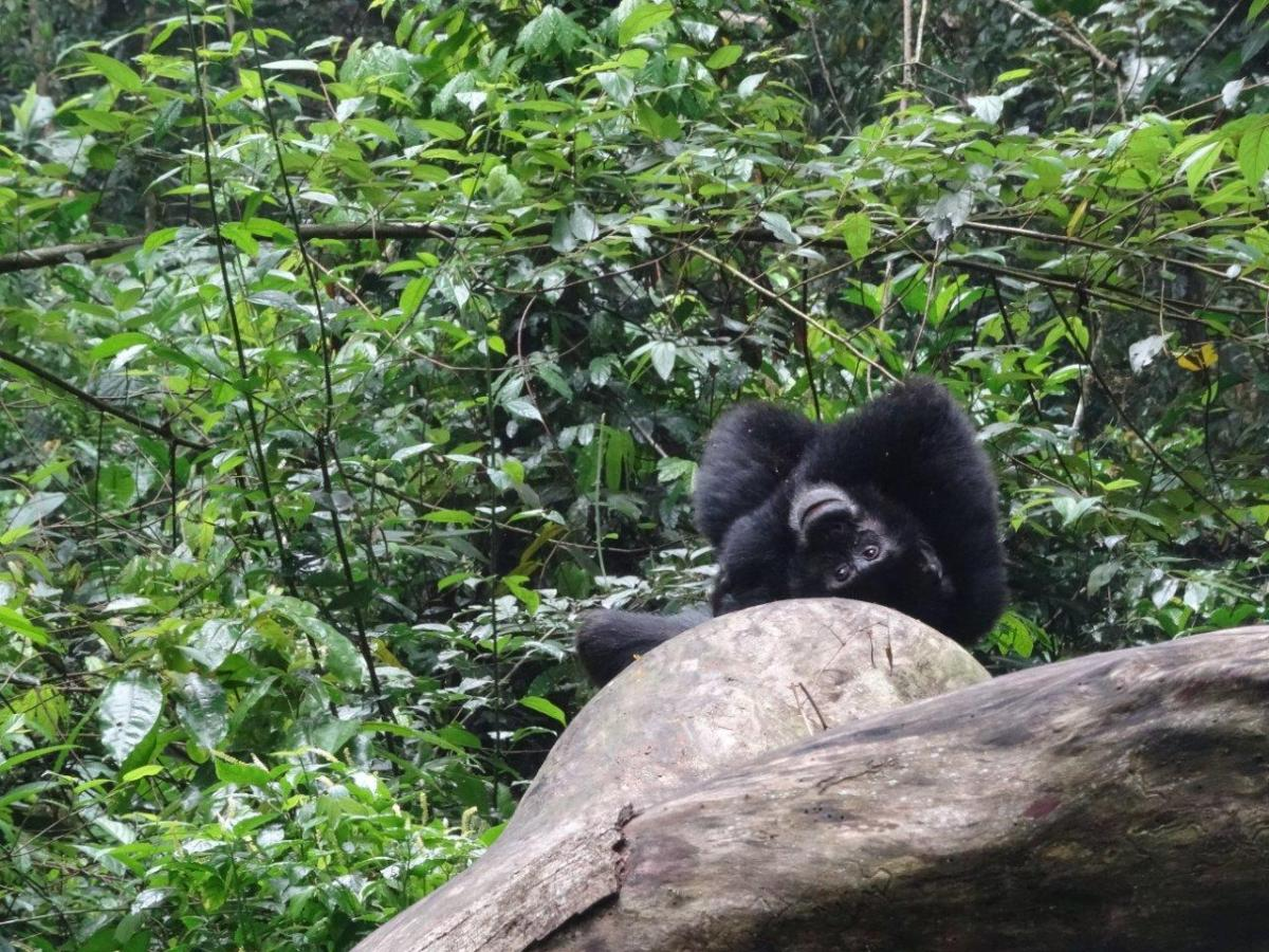 What are you looking at. Chimp Tracking in Kibale Forest National Park, Uganda.