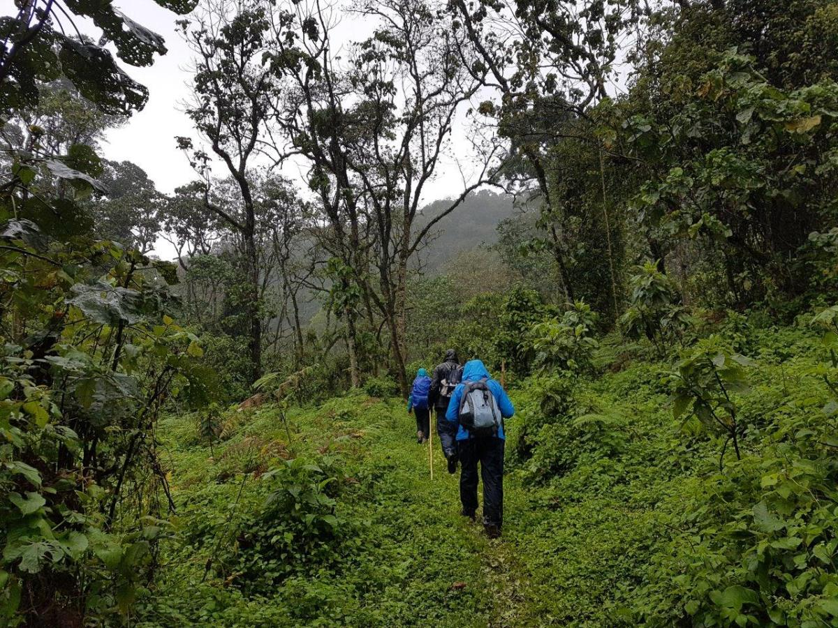 Hiking though the green forest. Gorilla trekking in Bwindi. Ruhija, Uganda.