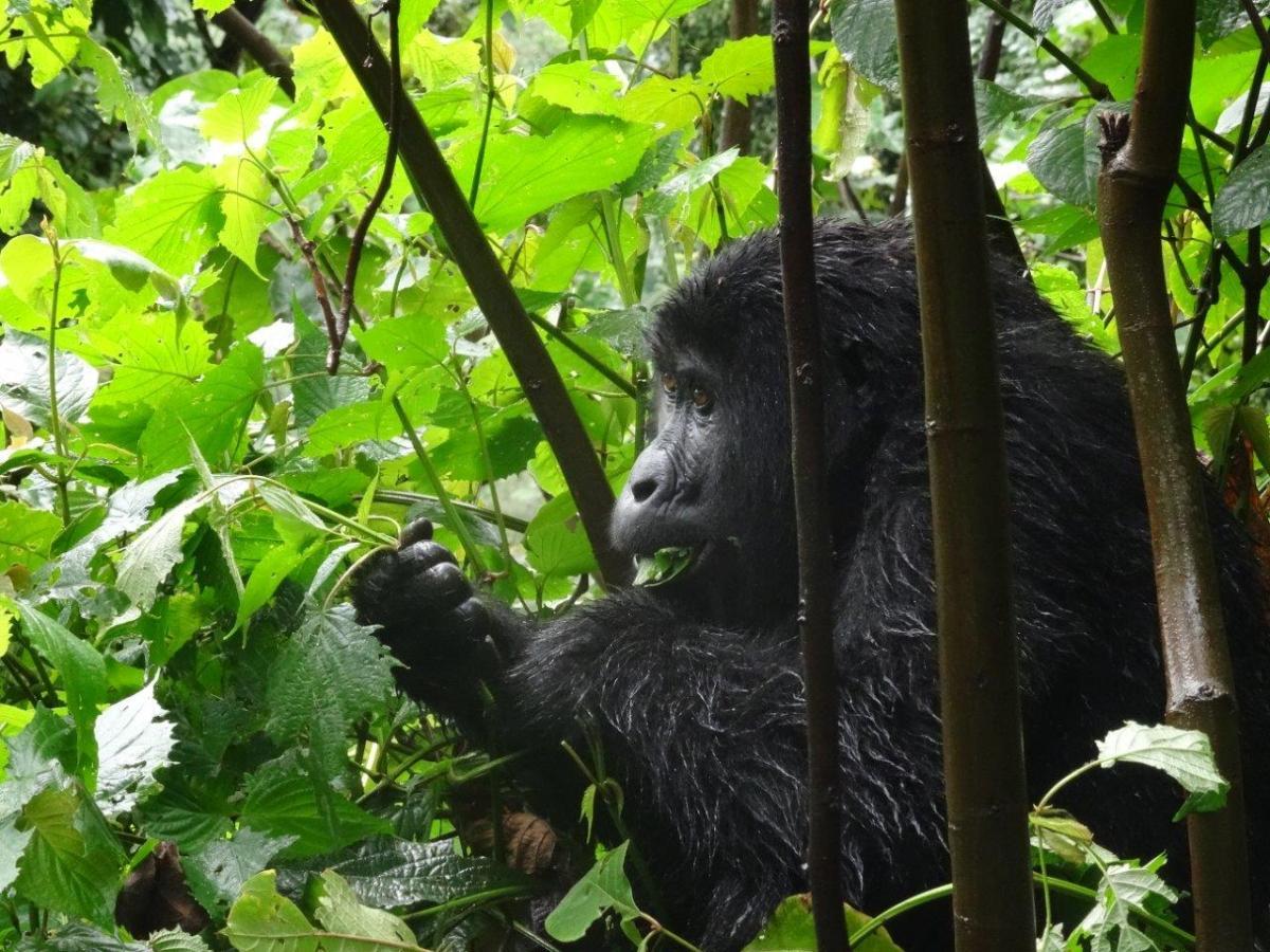 Pre-lunch snack. Gorilla trekking in Bwindi. Ruhija, Uganda.